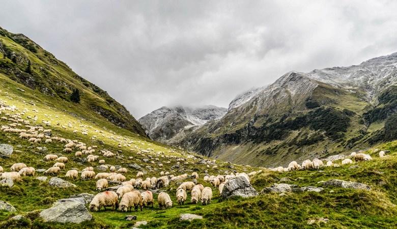 50 organizaciones españolas se suman a la campaña para celebrar un año internacional de los pastos y el pastoreo