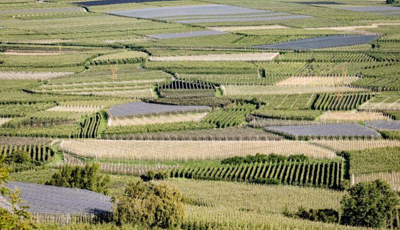 #PestizidTirol: A juicio por criticar el uso masivo de pesticidas