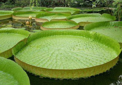 El cambio climático podría poner en peligro la germinación de plantas tropicales
