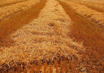 Hacia una mejor gestión de la fertilización agrícola