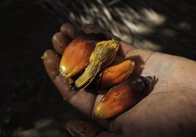 La violencia y el abuso sexual contra las mujeres en las plantaciones de palma aceitera debe terminar