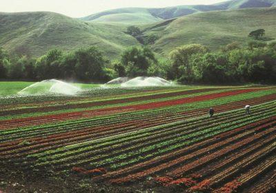 Primer informe del mapeo de las iniciativas agroecológicas en Europa
