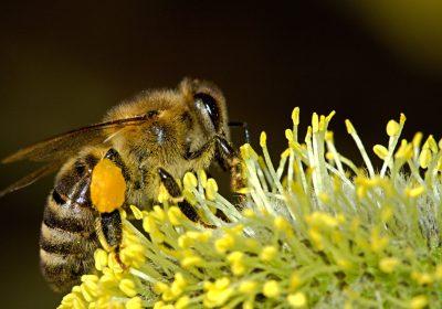 Las abejas también desaparecen de los registros