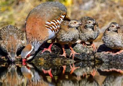 Efecto negativo del fungicida tebuconazol sobre el éxito reproductor de las aves granívoras