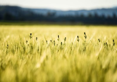 """Estimando el """"estado"""" agroecológico de una finca: una herramienta de evaluación rápida"""
