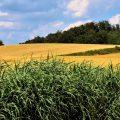 Confrontando la agroecología chatarra: elementos para oponerse a la captura corporativa de la agroecología