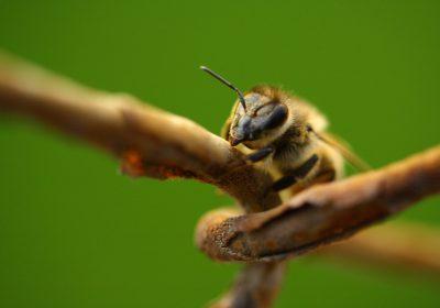 Toxicidad total aplicada y sus impactos en invertebrados
