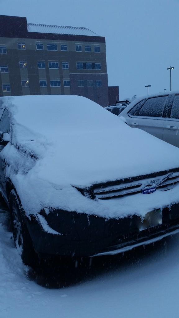 spring snow 1 (2)