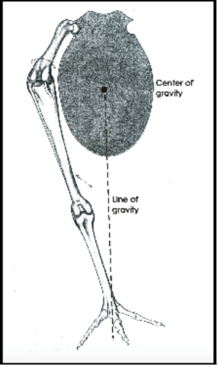 Bird-gravity