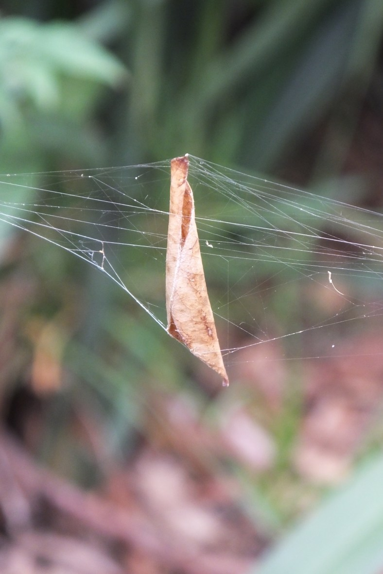 leave in web