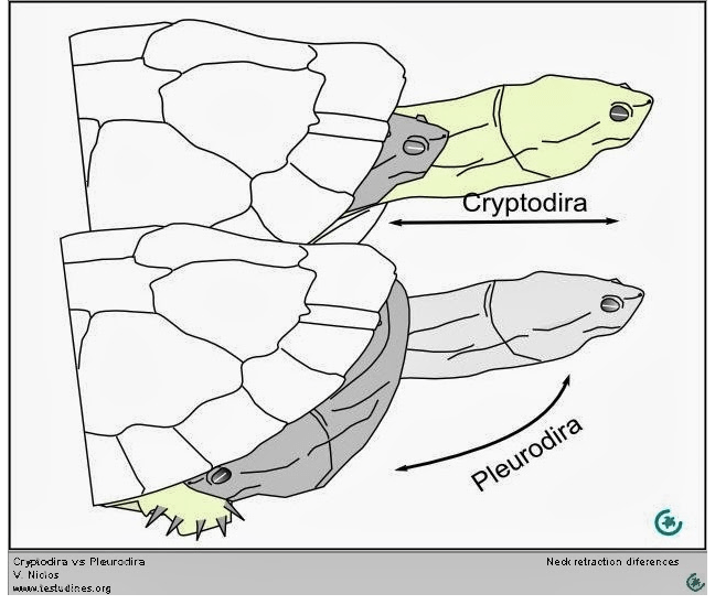turtle necks