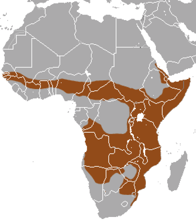 Distribution of the Banded Mongoose in Africa