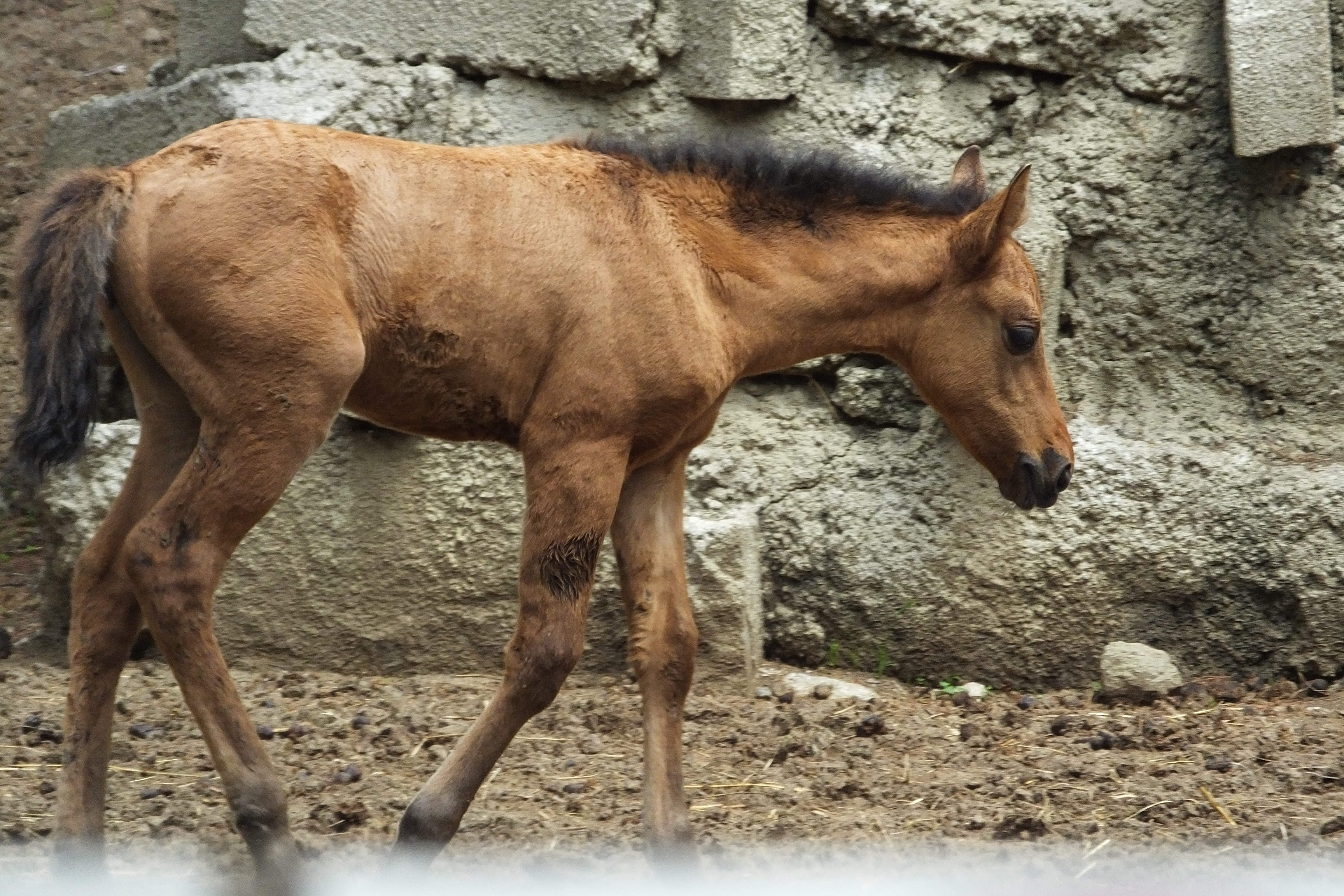 What is a foal   SIMILAR BUT DIFFERENT IN THE ANIMAL KINGDOM