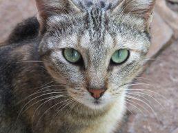 Eyes of a cat