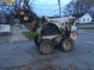Girard Tree Removal