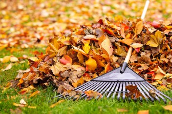 Leaf clean up Girard Ohio
