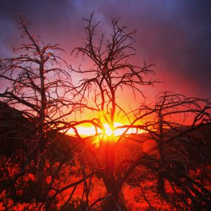 Dead trees hold the last light of a fiery sunset at Chiricahua National Monument.