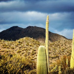 Summer rainclouds and the Tucson Mountains viewed from Arizona-Sonora Desert Museum.