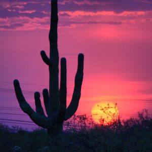 Sunset with saguaro (and powerlines), viewed from the community of Civano.