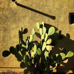 Orange tuna cactus and barrio-style home.