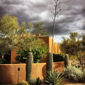 Agave inflorescence and the coming summer storm.