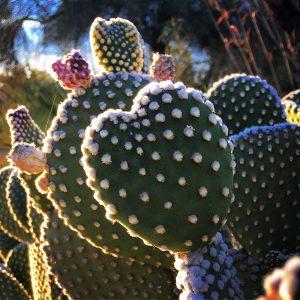 A valentine's cactus, of course!