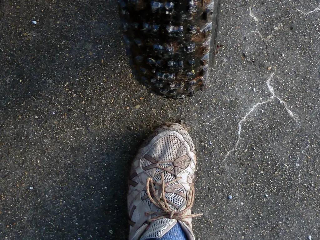 Fatbike Footprint - breiter als ein Fuß