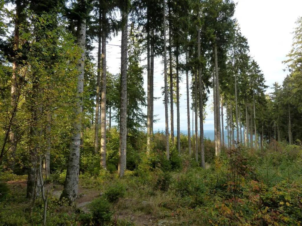 westweg-baeume-am-karlstein