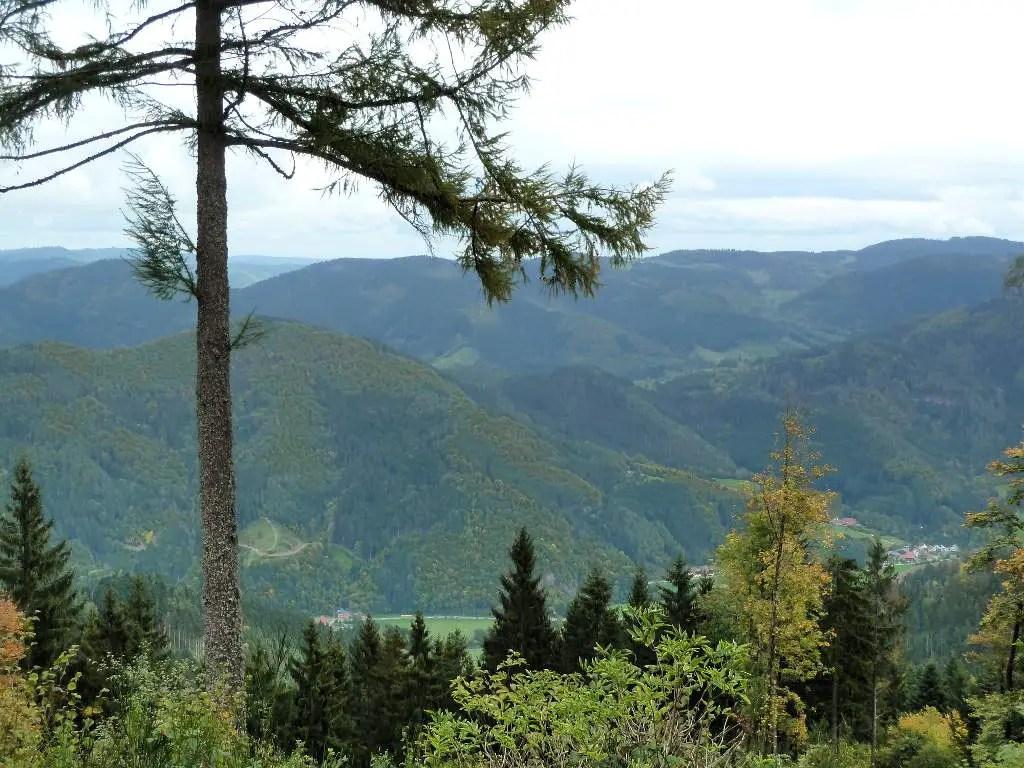 westweg-farrenkopf-panorama
