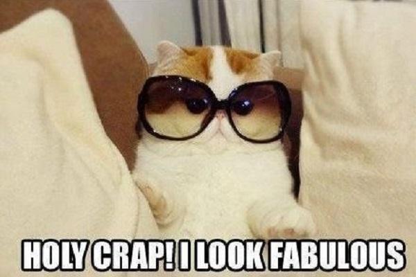 pisica fabuloasa