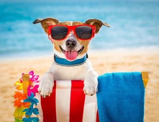 Cum să ne protejăm câinele pe timp de caniculă