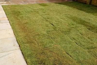 Simon-Cook-Landscaping-Faringdon-18-garden-maintenance