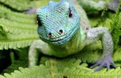 Ein kleines Reptil im Farn.