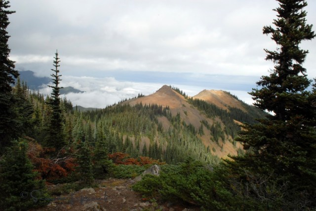 Blue Mountains (?) Washington