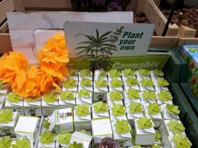 Vendita semi di Cannabis