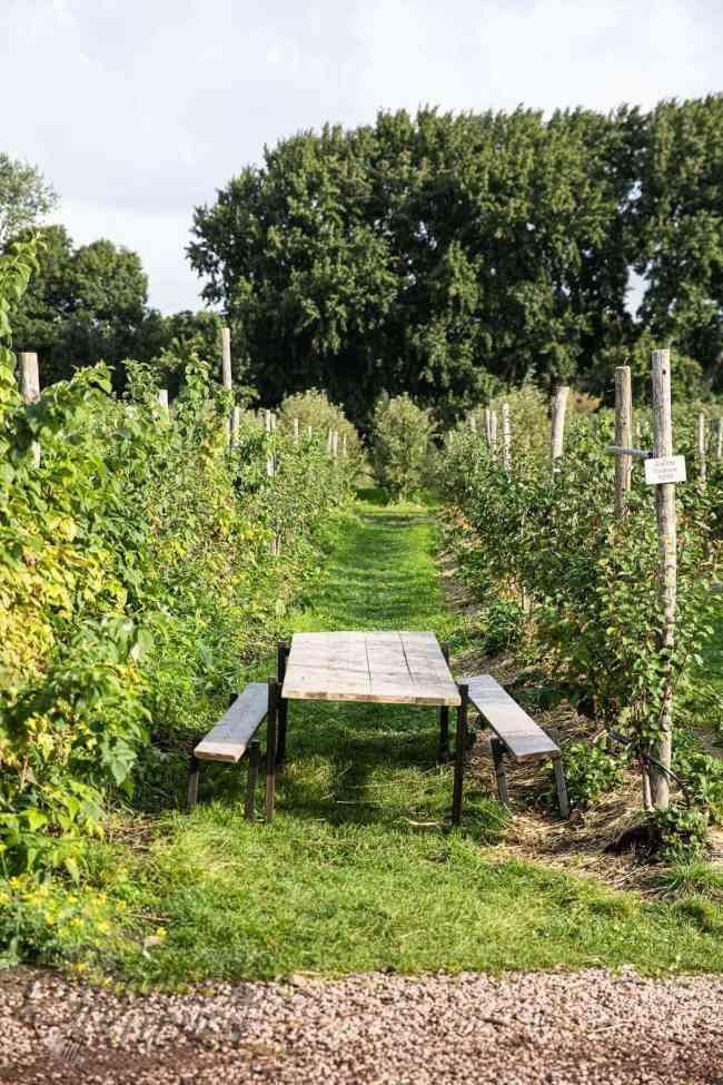Picknicktafel in de boomgaard