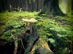 Pilz im Westerwald