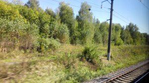 Weite Wälder gibt es zwischen Moskau und Voronež zuhauf.