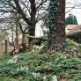 Yashica 230 AF sample picture - Tree in the graveyard at Cottered church