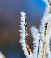 Frost and Snow 1
