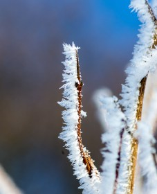 Frost and Snow 4