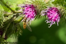 Wimpole Hall in Cambridgeshire pictures - Hoverfly