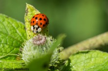Wimpole Hall in Cambridgeshire pictures - Ladybird