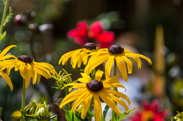 Wimpole Hall in Cambridgeshire pictures - Yellow Flowers