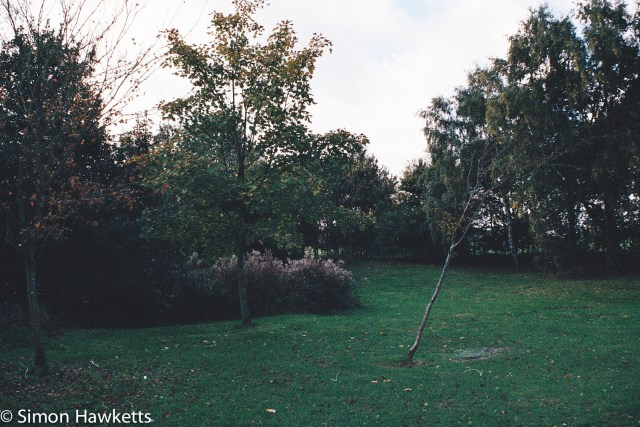 Minolta 7000 35mm slr sample picture - Trees and grassland