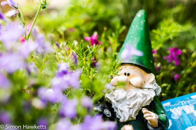 Garden pictures with Takumar standard lenses - A gnome guarding the fence