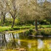 Foggy bottom gardens pictures - The pond