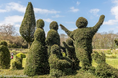 Kentwell Hall Tudor day pictures - Topiary