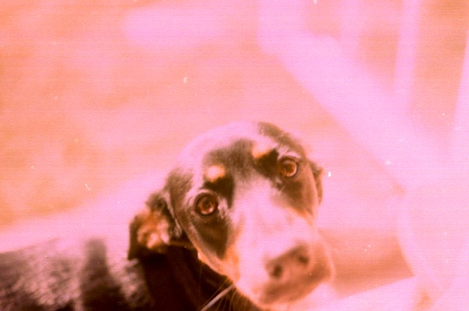Photos from film found in old cameras - A dog in sunlight
