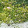 Soligor 200mm f/3.5 samples - Tree in a sea of white